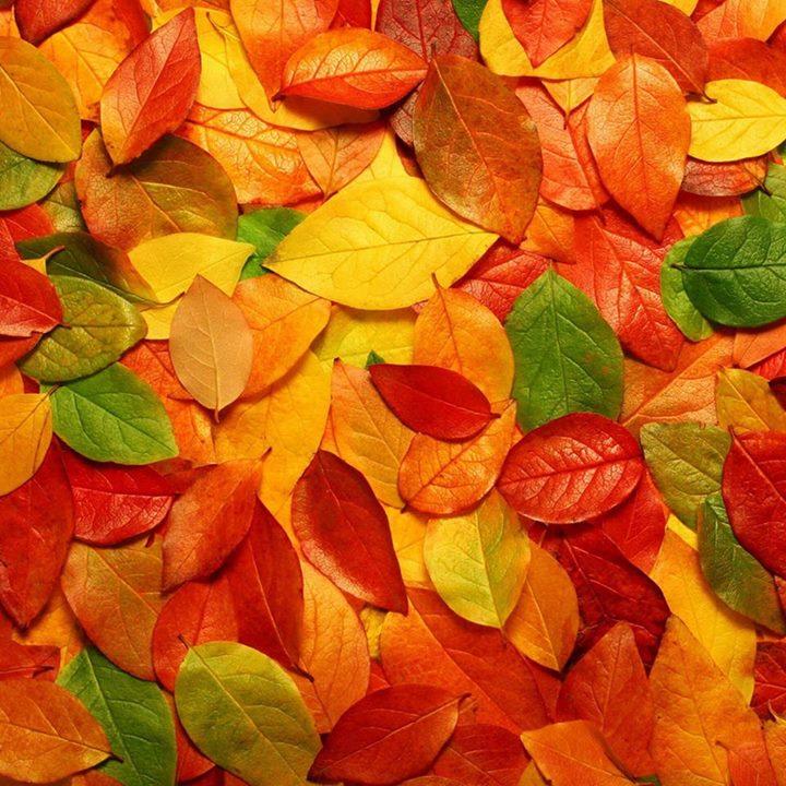 ballo-d-autunno-cena-di-autofinanziamento-trieste-folk