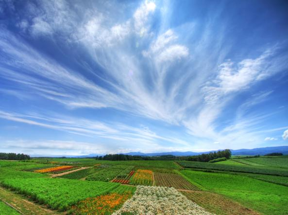 4799_main_cirrus-fibratus-radiatus_clouds-0020-kUOE-U43300254523940ZcD-593x443@Corriere-Web-Sezioni